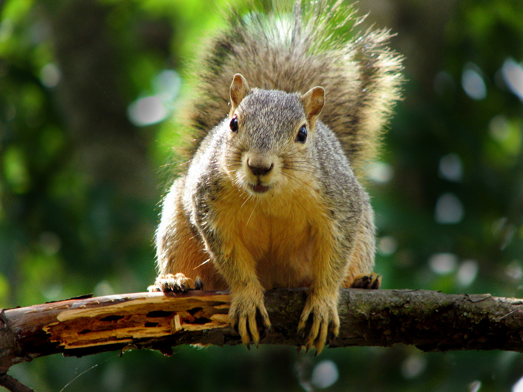 Squirrel It S Not The Other White Meat