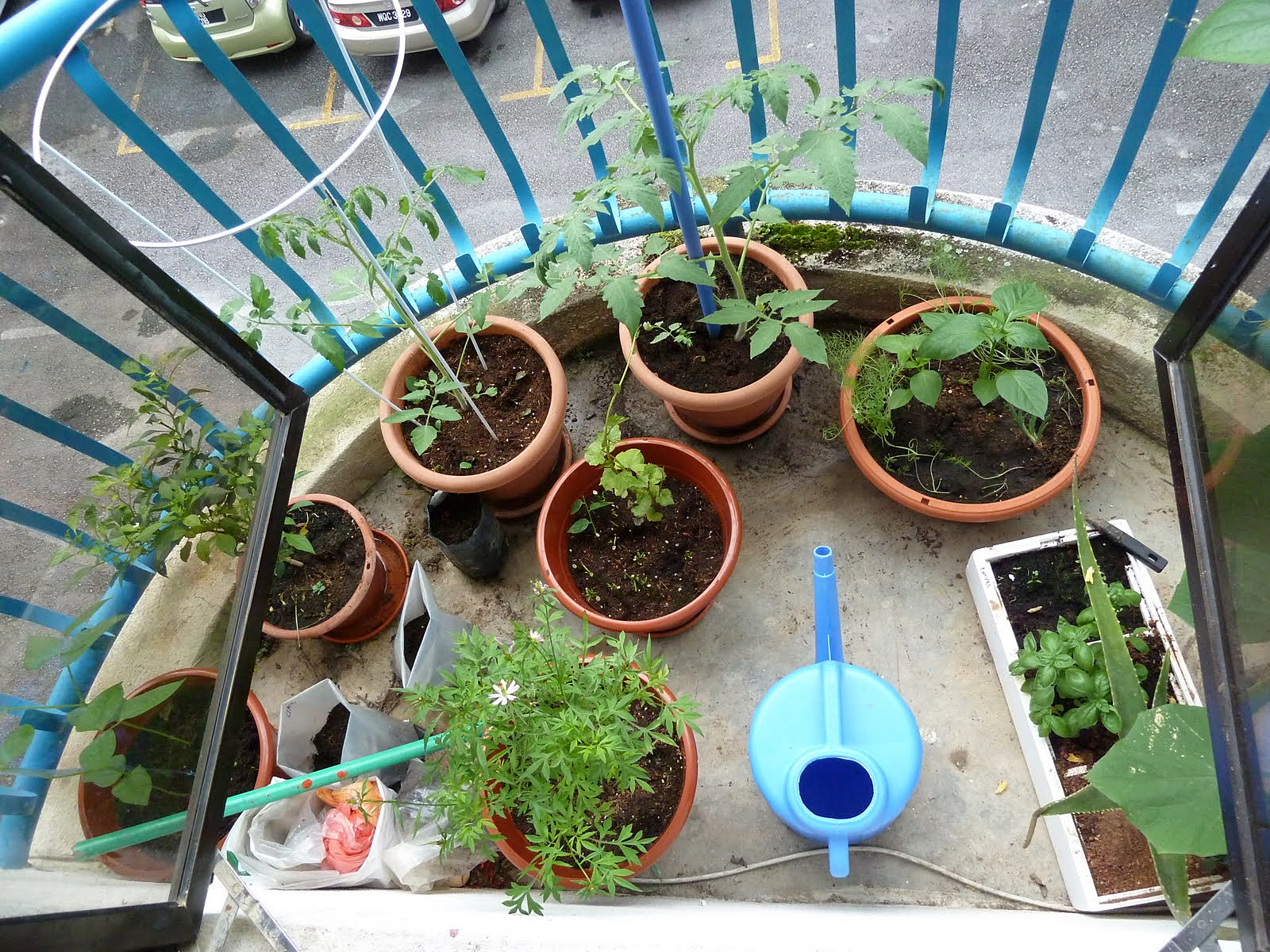 Container Gardening for Urban Preppers Growing Your Own Food