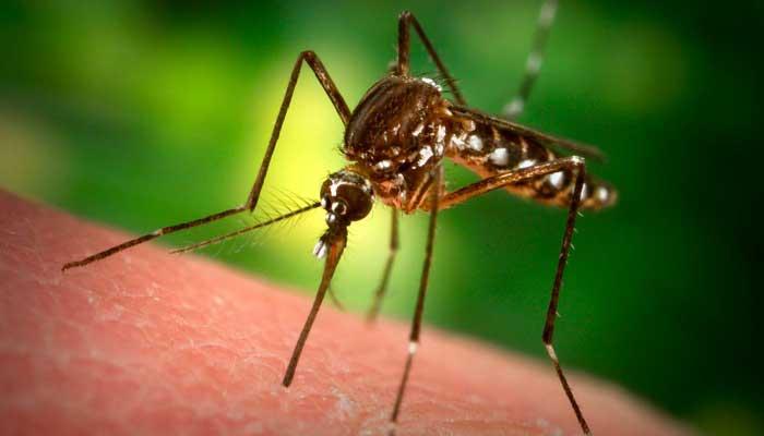 mosquito biting person