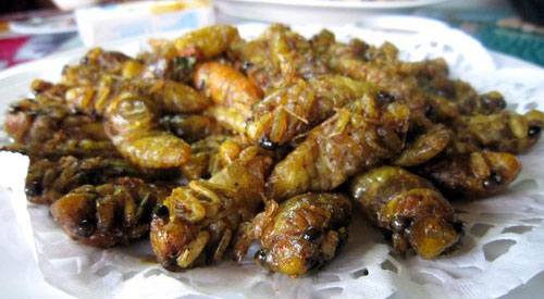 Deep Fried Cicadas
