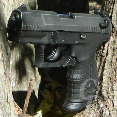 Walther P22 perched in crook of a tree