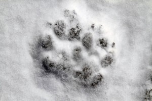Women Afield-Winter Weather Hunting Safety Tips, Part 3