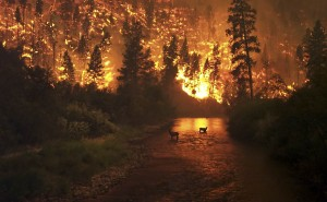 A wildfire burning the background, with two deer standing in a body of water.