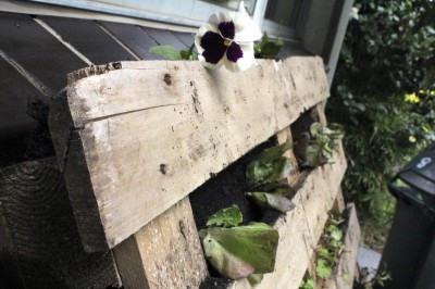 Garden growing in a wood pallet