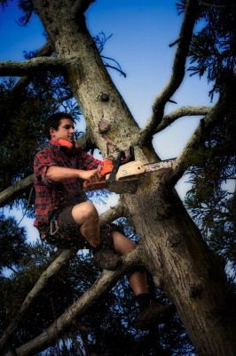 Dark haired man in multi colored shirt and shirts partway up a tree trimming branches for a treestand