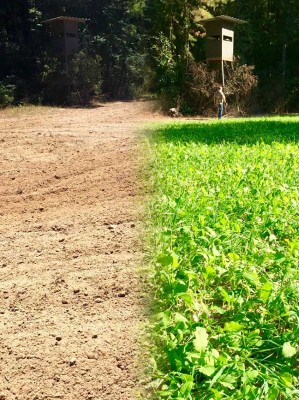 before and after food plot