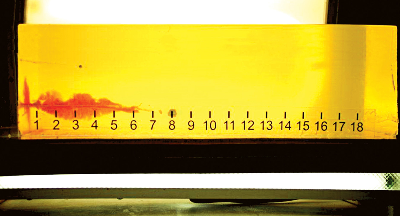 Ballistic Gelatin showing bullet penetration